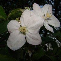 Цветочный хоровод-422. :: Руслан Грицунь