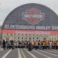 Harley Davidson в Петербурге :: Вера Моисеева