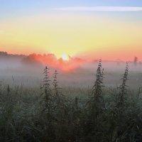 Туманный, розовый рассвет :: Павлова Татьяна Павлова