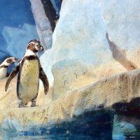 пингвины :: Елена Ушакова