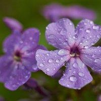 после дождя :: Седа Ковтун