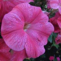 Цветок :: Валерий A.