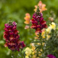 Мои любимые цветы :: Val Савин