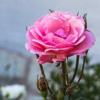 Царица цветов. :: Милена )))