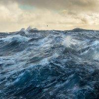 В море :: олег