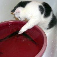 кошачья рыбалка :: Александр Прокудин