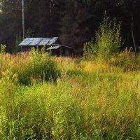 Подыскиваю недорогой домик в деревне :: Андрей Лукьянов