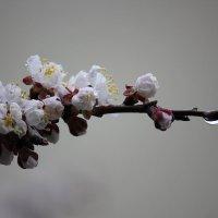 Цветочный хоровод-430. :: Руслан Грицунь