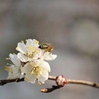 Цветочный хоровод-429. :: Руслан Грицунь