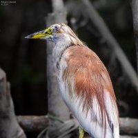 Сафари на реке Маду Ганга. :: Edward J.Berelet