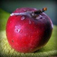 Наливное яблочко :: Андрей Заломленков