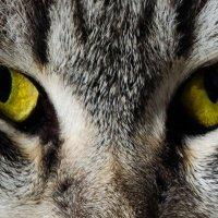 Я смотрю за тобой! :: Сергей Щербаков