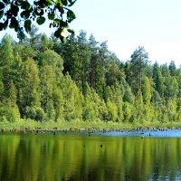 Лесное озеро :: Mavr -