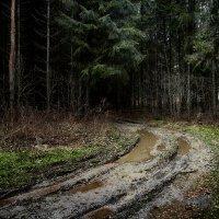 В Лесу :: Алексадр Мякшин
