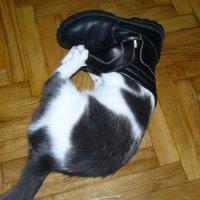 кот в сапоге :: Александр Прокудин