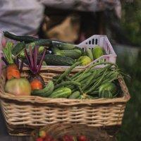 Урожай :: Вера Арасланова