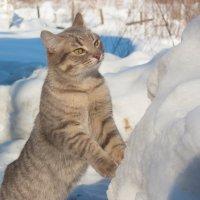 Зима в разгаре :: Мила Солнечная