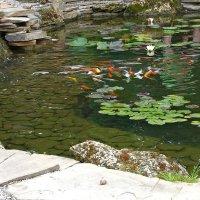 Пруд с рыбками :: Evgeny St.