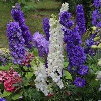 Цветочный рай :: leoligra