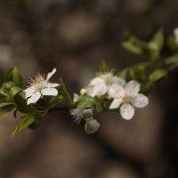 Цветочный хоровод-437. :: Руслан Грицунь