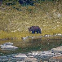 Встреча с медведем. Остров Большой Шантар. Охотское море. :: Vladimir 070549