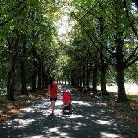 Летний полдень в парке :: Владимир Бровко