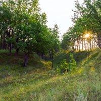 На краю леса :: Юрий Стародубцев