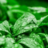 После дождя :: Алексей Васильев
