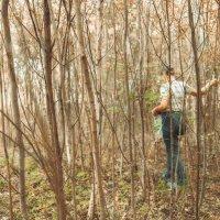 И в молодой лесок- стряхнуть под зеленью усталость :: Ирина Данилова