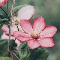 В саду :: Анна Суслова