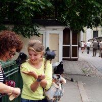 Жадные до хлеба голуби. :: Сергей Исаенко