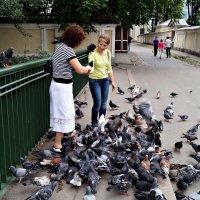 Кормежка голубей. :: Сергей Исаенко