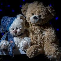 Bears :: Николай Т