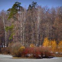 Весенний лес :: Роман Львович