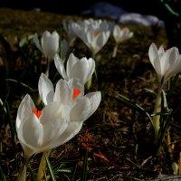 Весна :: Leonid Volodko