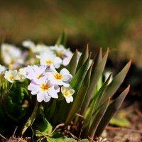 весна :: Владимир Хижко