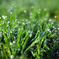 Grass :: Olga Vasileva