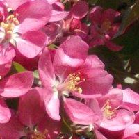 Розовый сон :: Лидия Далли