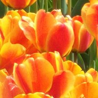 Цветочный пожар :: Лидия Далли