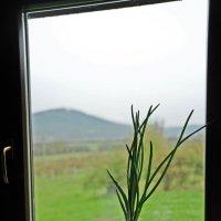 весна за окном... :: Марина Брюховецкая