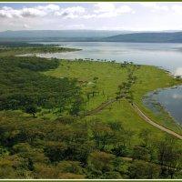 Озеро Накуру :: Евгений Печенин