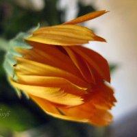 оранжевое настроение :: Марина Голуб