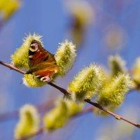 весна :: konstantin tatonkin