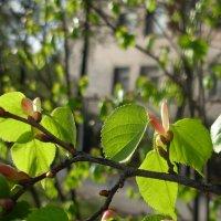 Из серии Весны очарованье :: Нина Федорова