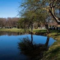 Cemetery :: Olga Vasileva
