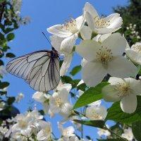 Скромное обаяние весны :: Николай Белавин