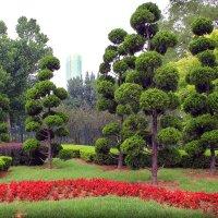 объемные деревья :: Алёна Компаниец