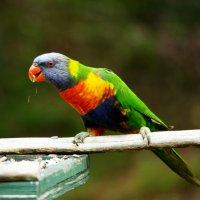 Bird :: Dasha Svistelnikova