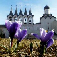 первые цветы :: Сергей Кочнев