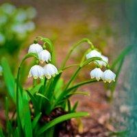 Весна :: Ирина Ефимова